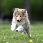 puppyrunning
